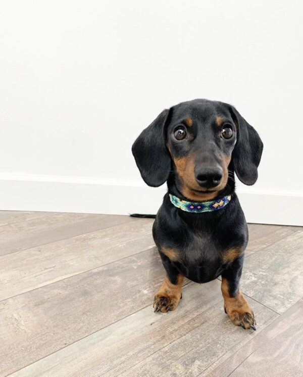 Sfeerfoto hondenhalsband XXS